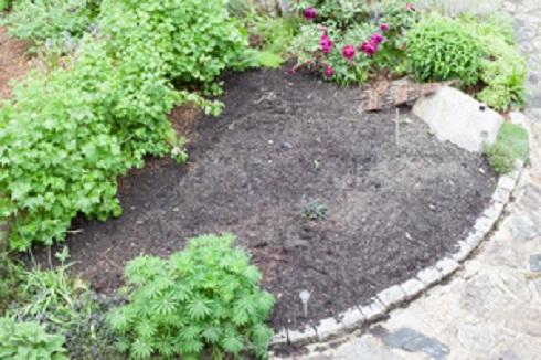 #1 dyers garden blog