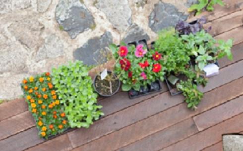 #2 dyers garden blog