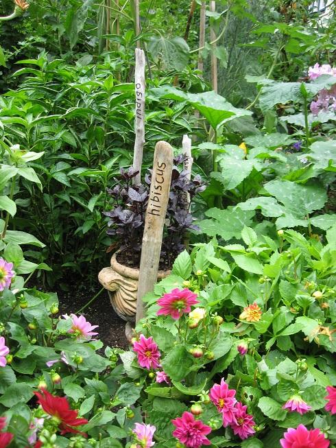 #5 dyers garden blog
