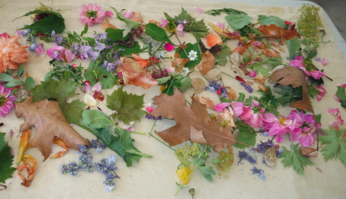 4ECO DYEING JULY 11, 2014 AT DOROTHY THOM'S 019